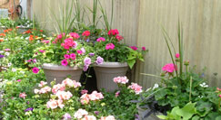 Container gardening available.