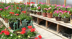 Flower display at our greenhouses.